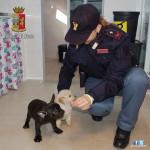 Uno dei cuccioli commerciati illegalmente