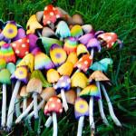 funghi-allucinogeni