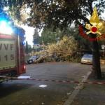 L'albero Caduto in viale Terme di Traiano