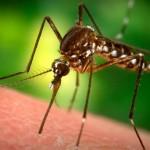 zanzare-rimedi-naturali